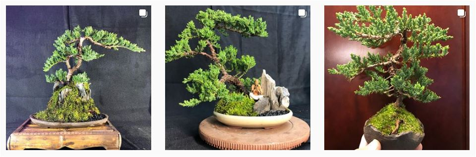 Bonsai Bob Everett Farmers Markets Virtual Marketplace